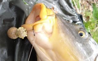 Видео ловля карпа на бойлы