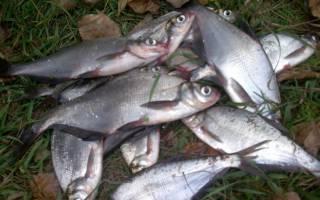 Ловля рыбы на закидушку