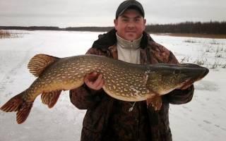 Рыбалка на щуку зимой на жерлицы