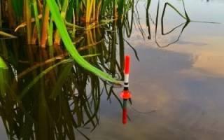 Секреты ловли карася на поплавочную удочку