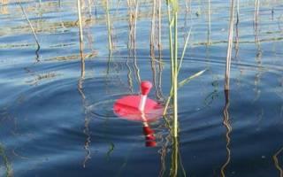 Рыбалка на кружки летом