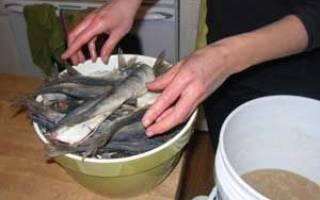 Как солить рыбу для сушки