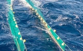 Какая ячейка сети для какой рыбы